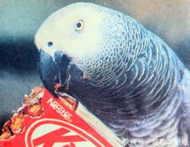 鹦鹉基因组分析揭示了对长寿认知的见解