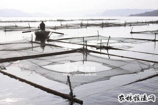 如何提高水产养殖效益