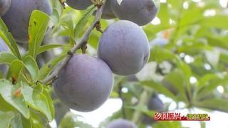浙江宁波小蛏子撬动乡村振兴大产业