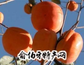 井儿峪大盖柿