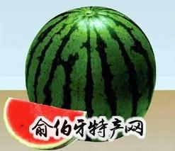 昌蜜红少籽瓜