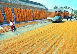 2019年全区夏粮收购基本结束 小麦市场化收购取得积极成效