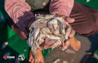 中国近海机动捕捞渔船航次统计