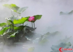 第六届上海荷花睡莲展本周五古猗园启幕