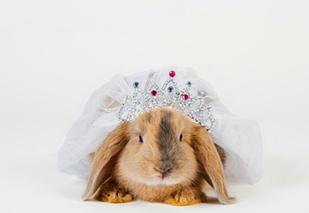 兔病防治草代药的方法