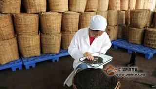 制茶技术——湖南黑茶制造