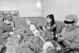湖南金银花产业带来真金白银
