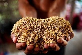 玉米加工设备的三个重点技术分析