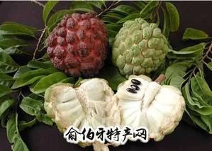 香洲番荔枝