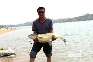 巴图湾鲤鱼