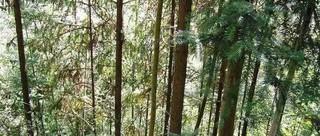 杉木的栽培技术要点