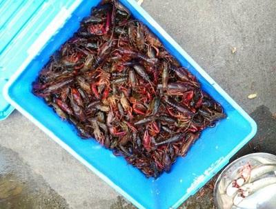 益阳南县举办小龙虾捕捞节