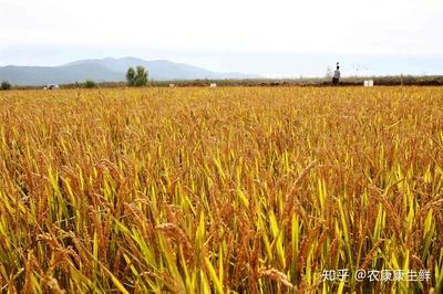 农业农村部:预计今年粮食产量达到历史最好水平