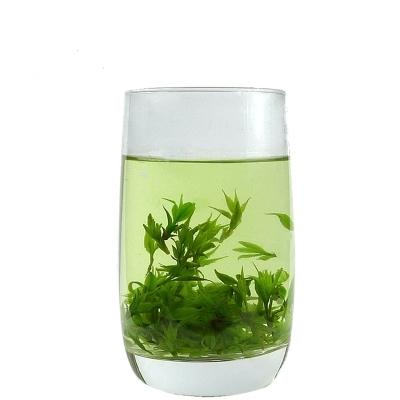 苦丁茶有多少个品种?苦丁茶哪种品种好?