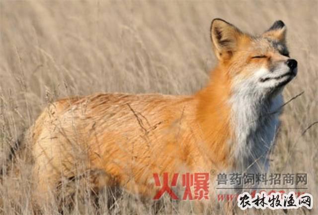 影响毛皮动物毛皮质量的因素