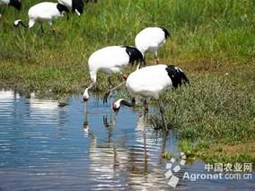 黑龙江珍稀鸟类种群量上升