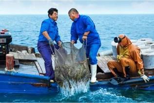 把控原料养殖 引导终端消费 品质成为海参产业升级关键词