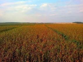 吉林:大米、玉米和杂粮,打造粮食三张名片