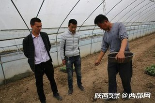 陕西:百余人田间学种紫长茄子