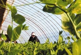敦煌种业农业科技(上海)公司考察新余蜜桔