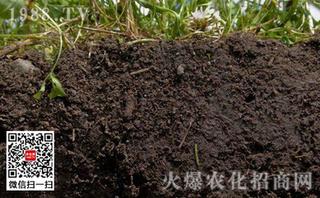 酸性土壤应选钙镁磷肥