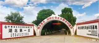 宜昌:扶持贫困村建猕猴桃基地