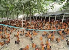 冬季蛋鸡舍环境的调控