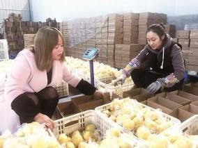 """四川安岳:一颗柠檬如何""""触网""""拓市场?"""
