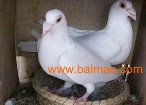 组织养殖户赴上海参观学习肉鸽养殖技术