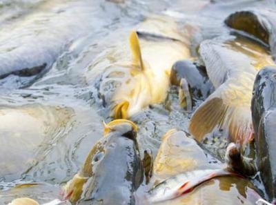 重拳整治远洋渔业非法捕捞 农业农村部取得显著成效
