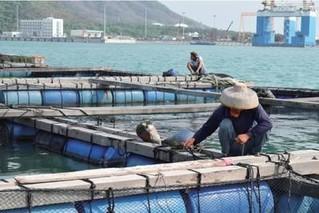 海南首家石斑鱼基地获备案资格
