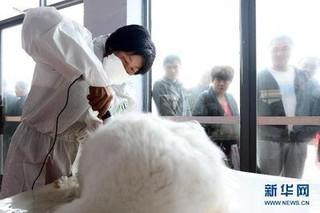 沂蒙山养兔养貂:风险变保险