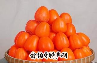 唐村无核柿