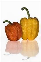 甜椒茎秆腐烂解决方法