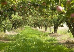 怎样保护果园害虫的天敌