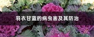 羽衣甘蓝病虫害防治方法