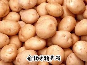 白城马铃薯