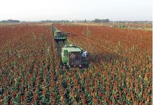 高梁从种到收都交给农机