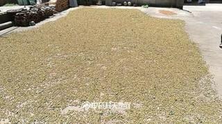 浙江淳安:部门合作提升覆盆子种植服务水平