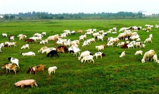 农业部禁3种兽药用于食品动物