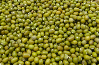 2019年绿豆生产技术指导意见