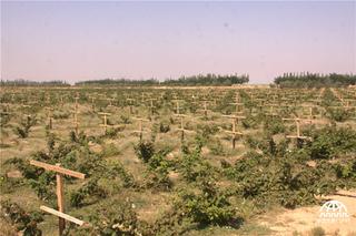 银川月牙湖农民红树莓园里赚外快