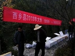 陕西西乡水产站举行增殖放流大鲵活动