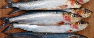 咸干沙丁鱼的制作方法