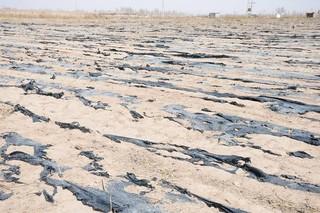 新疆废旧地膜回收率达75%上 面源污染治理初步取得成效