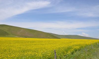 青海高原现代农牧业的绿色崛起