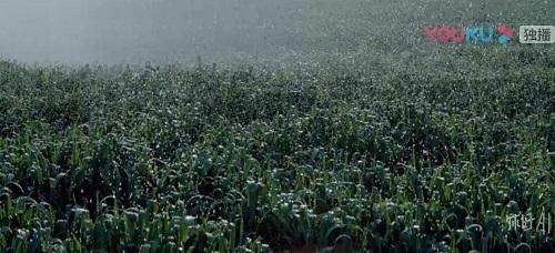 上海科技兴农的成果助力中国农业绿色发展