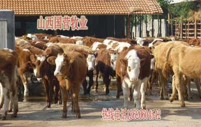 """围绕""""五位一体""""总体布局 河北邢台市大力推进农业极速5分排列3现代化"""