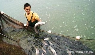 黑鱼的捕捞技术