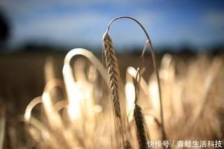 大麦中发现全新碳水化合物